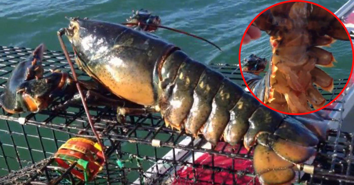 3 Tick Lobster Fishing