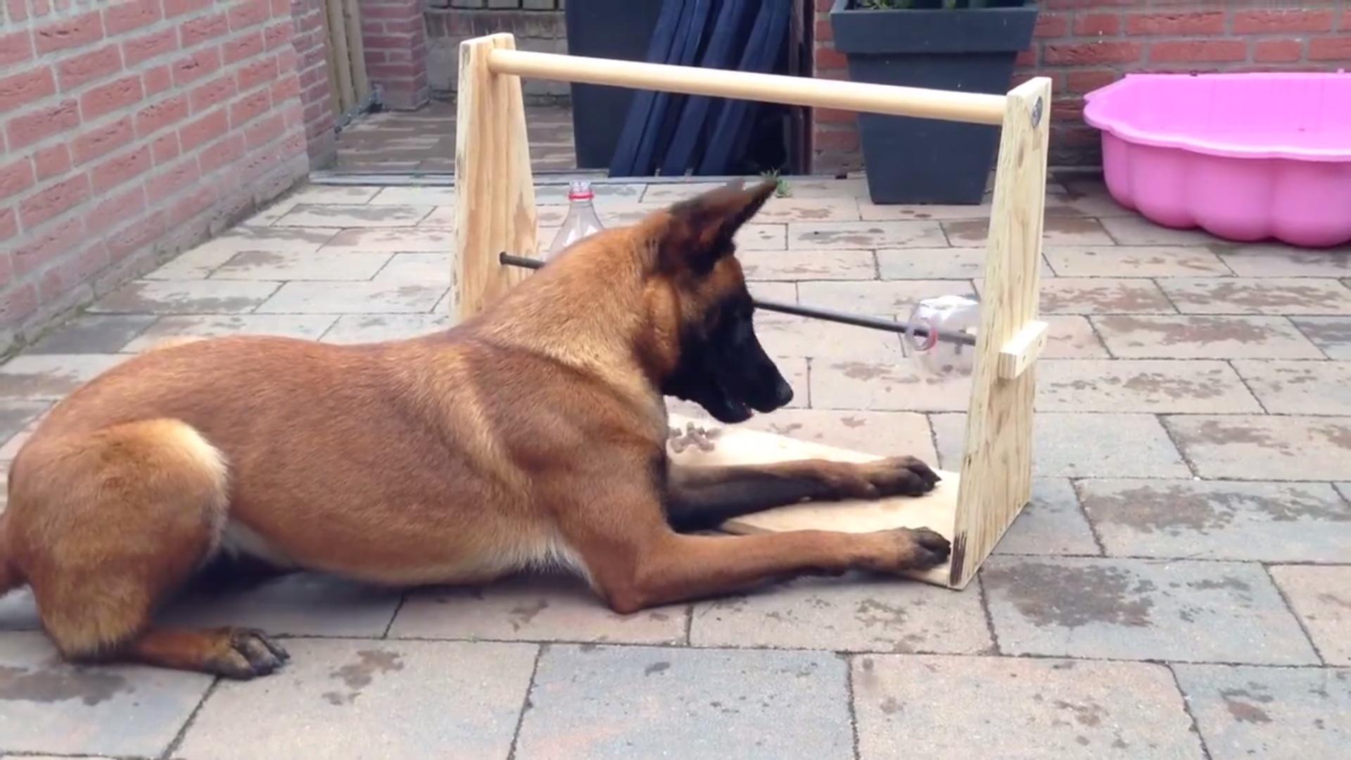Dog Picks Out Big Toy
