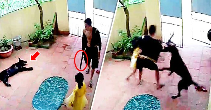 Heroic dog fights with armed kidnapper to save his little human